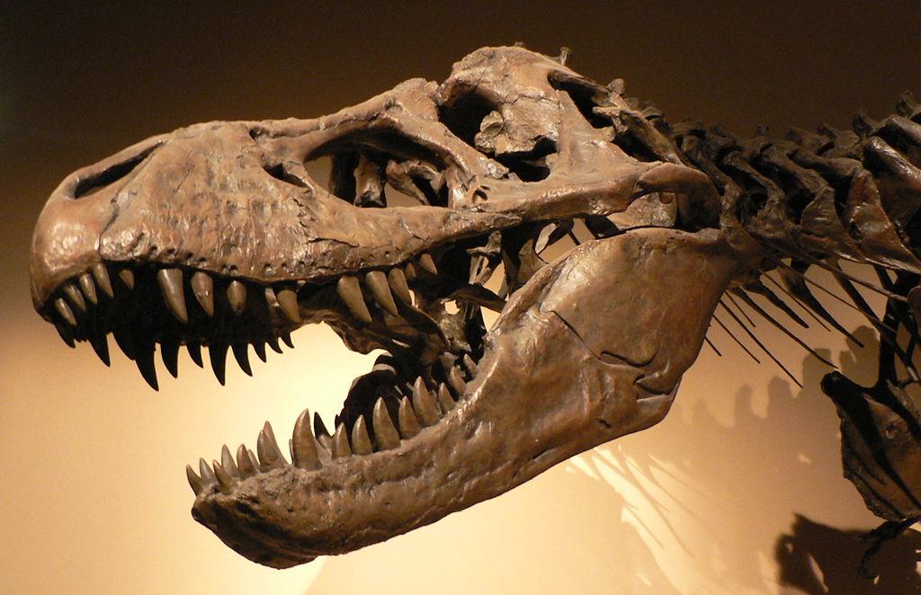 ฟอสซิล (Fossil)